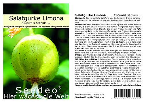 Seedeo® Salatgurke Limona (Cucumis sativus L) 20 Samen BIO