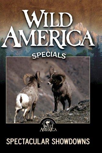 wild-america-spectacular-showdowns-by-marty-stouffer
