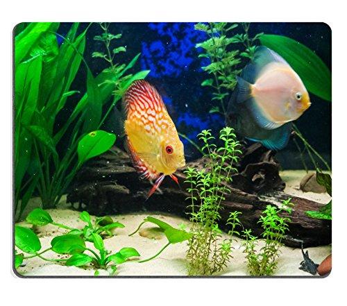 Liili Mouse Pad-Tappetino per Mouse in gomma naturale con molti tropicali in acquario, discus pesci tipici del Rio river ID 22525353 immagine