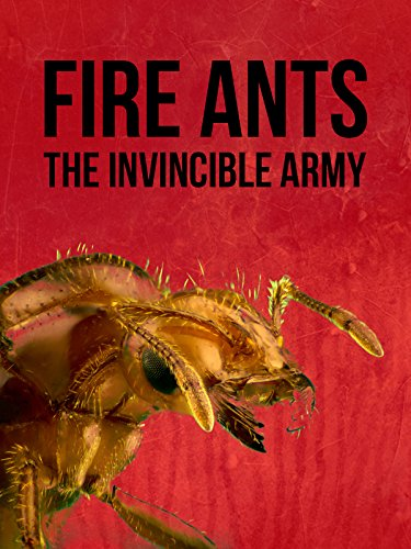 Fire Ants: The Invincible Army