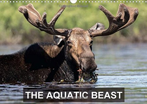 THE AQUATIC BEAST 2016: Moose in their favorite lakes (Calvendo Animals)