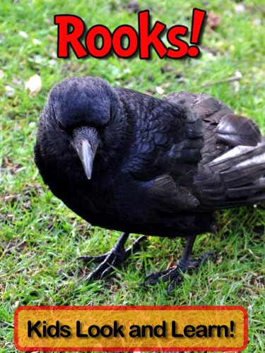 Rooks! Learn About Rooks and Enjoy Colorful Pictures - Look and Learn! (50+ Photos of Rooks) (English Edition)