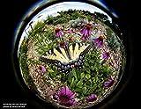 Lensbaby Circular Fisheye... Ansicht