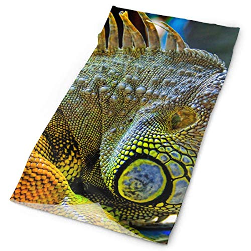 Reptiles-Nature-Lizard-Wallpaper Headband Bandana£¬Outdoor Multifunctional Headwear,Magic Scarf for Men Women 19.7x9.85inch(50x25cm) ()