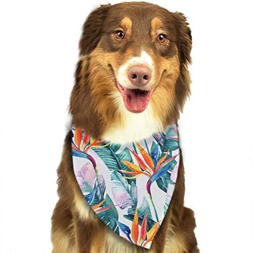(Hipiyoled Paradiesvogel Blume (2) Muster stilvolle Nette lustige Party-Mädchen-Jungen-Hundebandana modisch)