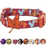 Blueberry Pet Herbst Spaß Bezauberndes Eichhörnchen Designer Hundehalsband mit Deko, Hals 30cm-40cm, S, Festtags-Halsbänder für Hunde