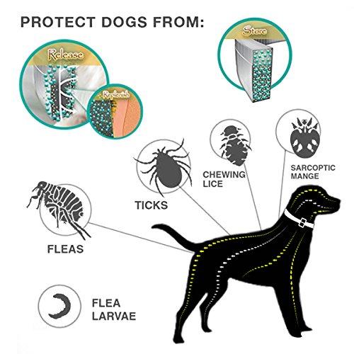 Zoom IMG-1 cane collare antipulci pulci e