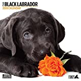 Magnet & Stahl Labrador schwarz Modern 2018Kalender