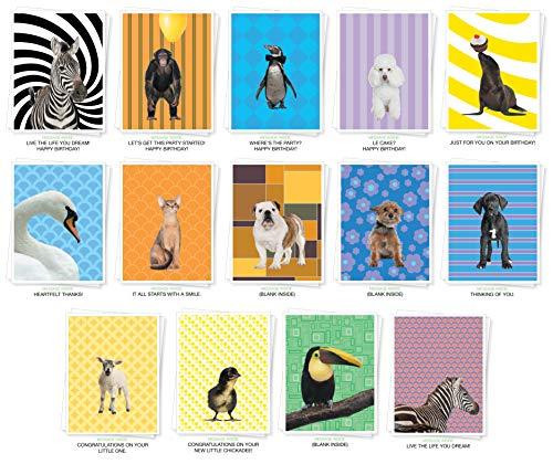 Apartment 2 Cards Verschiedene Tiere Premium Grußkarten-Bulk Set von 14Karten darunter: Geburtstag, Thank You, Baby, Inspiration und blanko -
