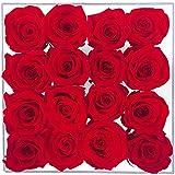 16 Vere Rose rosse preservato e eterno che non fanent | San Valentino | Fiori...
