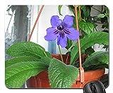 Streptocarpus Mouse Pad, Mousepad (Flowers Mouse Pad)