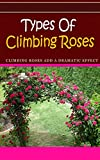 Types of Climbing Roses: Climbing Roses Add a Dramatic Effect
