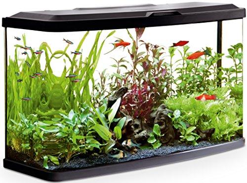 Fluval Aquarium Vue Kit pour Aquariophilie 76 x 30 x 45,7 cm
