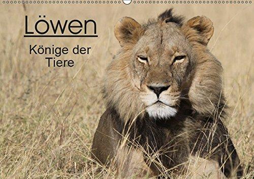 Löwen - Könige der Tiere (Wandkalender 2019 DIN A2 quer): Erleben Sie die grossen Katzen Afrikas in ihrem natürlichen Lebensraum. (Monatskalender, 14 Seiten ) (CALVENDO Tiere)