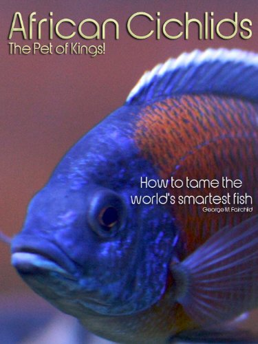 African Cichlids, The Pet of Kings! - How to tame the world's smartest fish. (English Edition) (Cichlid African Fisch)