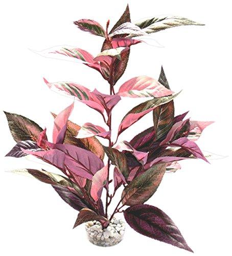 Sydeco 349733 Terrariumpflanze Burgundy Plant