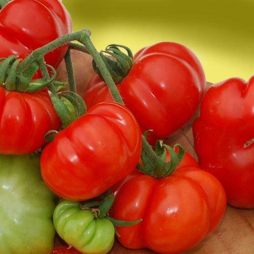 Plant World Seeds - Costoluto Genovese Seeds -