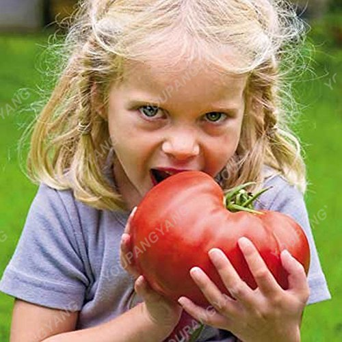 100 graines / paquet Graines rares Noir tomate très savoureux Nutritive bruyères Légumes Graines Bonsai pour jardin plantation facile rougissent
