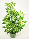 46cm Potted Artificial Silk Variegated Fatsia Japonica Plant ~ Office Plant in a Modern Green Silver Pot ~ Home & Conservatory Decoration