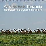 Wild animals Tanzania (Wall Calendar 2017 300 × 300 mm Square) (Calvendo Animals)
