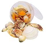 Conchiglie–secchio della confezione–Vongole 600grams–conchiglie per artigianato forniture e decorazioni in miniatura, ornamenti da giardino spiaggia bianco di mare e per la creazione di gioielli