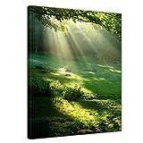 Bilderdepot24 Kunstdruck - Wiese - Bild auf Leinwand - 50x70 cm 1 teilig - Leinwandbilder - Bilder als Leinwanddruck - Wandbild Landschaften - Natur - Sonnenstrahlen auf einer grünen Wiese