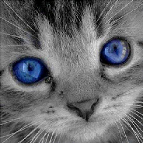 Sunnay Diamond Painting, 5D Diamant Stickerei Full Drill Blaue Augen Kat 20x20cm Phantom Schmetterlinge DIY Dekoration Malerei Kreuzstich Kit (66, 20x20cm) - Kat Auge
