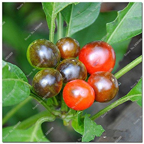 Cerise poivre Graines de légumes jardin Bonsai Chili usine Décoration non-Ogm Jardin Cuisine Assaisonnement Alimentation 200 Pcs 1