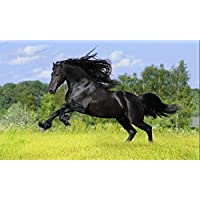 ClassicJP 1000Piece Jigsaw Puzzle Black Horse Animal Hobby Home Decoration Diy
