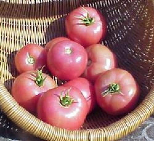 """Ungarische Samen Tomate""""Alte Russische"""" sehr selten,von unserer ungarischen Farm samenfest, nur organische Dünger, KEINE Pesztizide"""