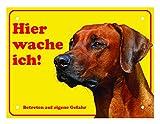 LUGUNO Hundeschild Rhodesian Ridgeback Hier Wache Ich 20x15 cm Gelb Schild Hund Aluminium Spruch Warnschild Warnung Achtung mit Lochbohrungen