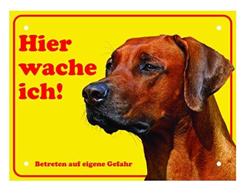 LUGUNO Hundeschild Rhodesian Ridgeback Hier Wache Ich 20x15 cm Gelb Schild Hund Aluminium Spruch Warnschild Warnung Achtung Mit - Garage Hund Tür