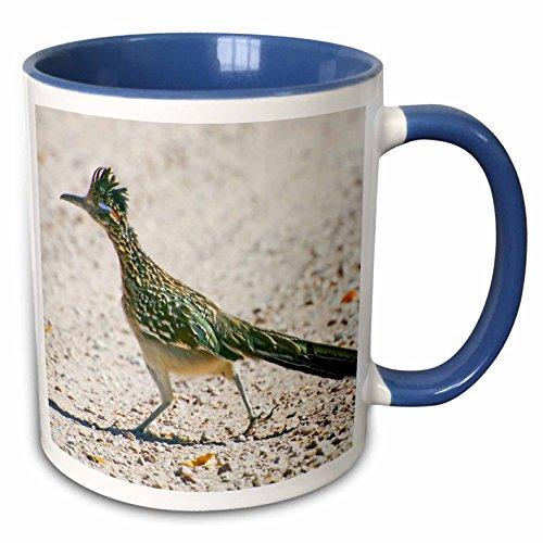 3dRose New Mexico Mexiko, Bosque, Apache Roadrunner bird-us32bja0086-jaynes Gallery-Two, Tasse, Keramik, Blau/Weiß, 10,16x 7,62x 9,52cm