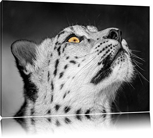 aufschauender Schneeleopard schwarz/weiß auf Leinwand, XXL riesige Bilder fertig gerahmt mit Keilrahmen, Kunstdruck auf Wandbild mit Rahmen, günstiger als Gemälde oder Ölbild, kein Poster oder Plakat