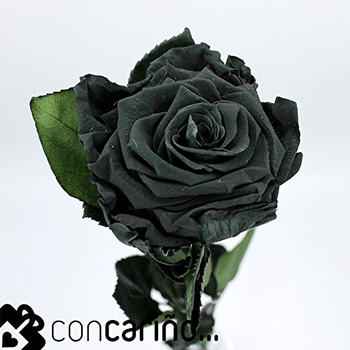 Rosa -Eterna Preservada (Negro/Verde) Night Green 50CM-6-6.5 DIAMETRO CABEZA ROSA