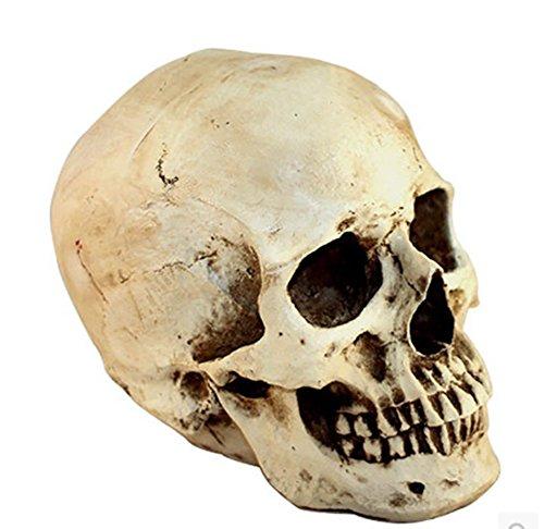 Qiulv Resina Humanos Cráneo Réplica Realista Sonriendo 1:1 Vida Tamaño Modelo Réplica Esqueleto Estatuilla Estatua Hueso Cabeza Estatuas Resina Decoración