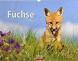 Füchse - Kalender 2019