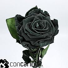 Rosa -Eterna Preservada (Negro/Verde) Night Green 50CM-6-6.5