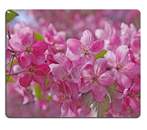 Jun XT natur Gummi Gaming Mousepads Zucker Konfekt in Glas Bild-ID 27590957