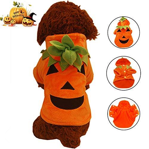 Orange Kostüm Katze - WMWJDQ Halloween Haustier,Hund Kostüm,Haustier Kostüm,Haustier Hund Katze Halloween Kostüme,Halloween-Kürbis-Katzen-Hundepullover,Halloween Haustier Mantel,Orange,XS