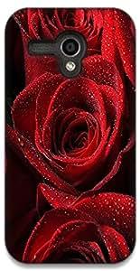 The Racoon Grip printed designer hard back mobile phone case cover for Moto G (1st Gen). (red rose)