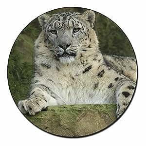 Belle Snow Leopard Aimant animaux don de remplissage de stockage