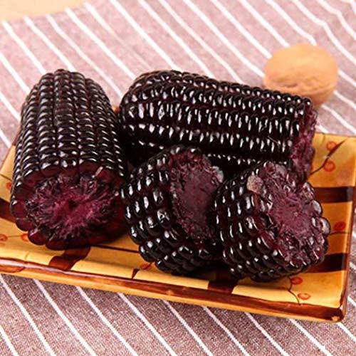 AIMADO Samen-Bio 10 Pcs Mais Saatgut Zuckermais \'Lila\' Früh reifend,Extra süßer Geschmack Gemüse,geeignet für Garten