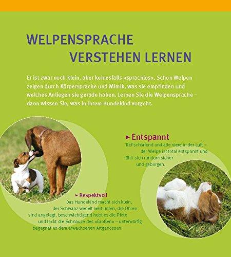 Welpen-Erziehung: Der 8-Wochen-Trainingsplan für Welpen - 2