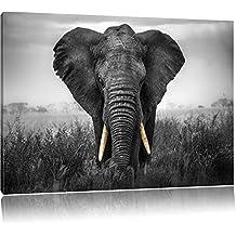 Elefanten Bilder Suchergebnis Auf Amazon De Für