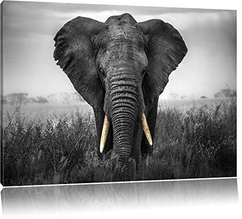 prachtvoller Elefant schwarz/weiß Format: 120x80 auf Leinwand, XXL riesige Bilder fertig gerahmt mit Keilrahmen, Kunstdruck auf Wandbild mit Rahmen, günstiger als Gemälde oder Ölbild, kein Poster oder Plakat