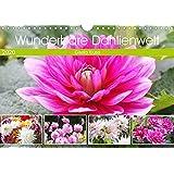 Wunderbare Dahlienwelt (Wandkalender 2020 DIN A4 quer): Die Königin des Spätsommers in farbenfroh leuchtenden Fotografien (Monatskalender, 14 Seiten ) (CALVENDO Natur)