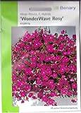 Hänge-Petunie, Fortunia Rosy Wave, F1 Hybride, Petunia hybrida, ca. 10 Samen