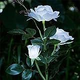 VENMO Solar Flower Pot LED-Licht Rose Blume Tischlampe 3 Lichter Blume LED flexible Blume Schreibtischlampe für Home Garden Room Dekoration (weiß) [Energieklasse A+] Solar-Rosen-Blumen-Licht, Solar Garten Außen Dekorative Landschaft LED Rose Lichter (white)