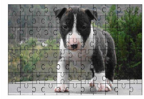 Staffordshire Bull Terrier (Blu) di cucciolo cane